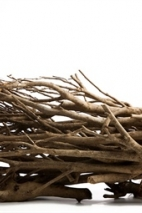Theetakken,bundel naturel, lengte: 60cm