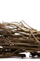 Tea twigs, natural bundle, length: 60cm