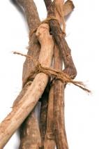 Bâtons de cannelle, 5 par botte, longueur: 120cm